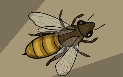 Bee Appreciation Digital Art